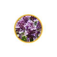 Чабрец обыкновенный (измельченная трава)