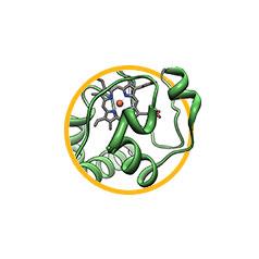 Цитохром С