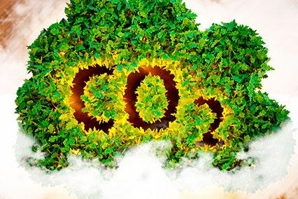 CO2-экстракты